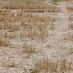 Ambiente: febbraio mese più 'asciutto' degli ultimi cento anni, problemi per agricoltori di Caccamo e Cerda