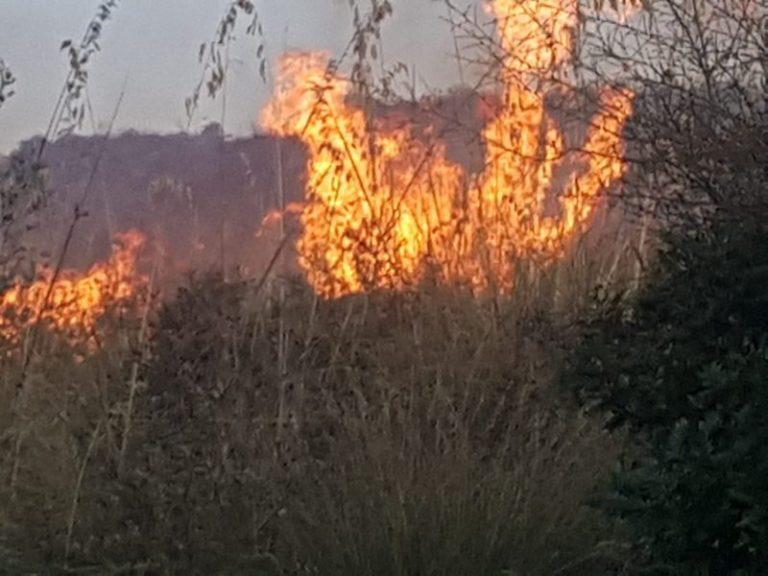 Brucia la provincia di Palermo: canadair in azione dalle prime luci dell'alba