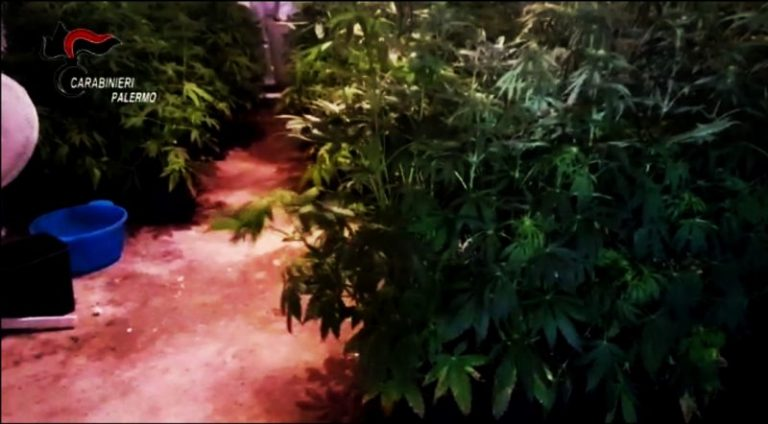 Trabia: serra indoor con 200 piante di canapa, in manette un trentenne